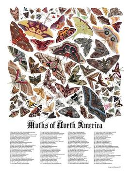 """moths-of-north-america,-signed-poster-18x24"""" by etsy"""