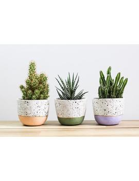 mini-speckled-plant-pot,-indoor-plant-pot,-small-succulent-planter,-plant-lover-gift,-handmade-cactus-planter,-housewarming-gift by etsy
