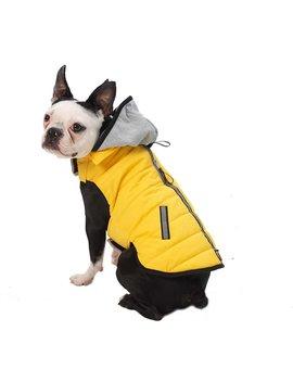 Pet Rageous Designs Stowe Dog & Cat Puffer Coat by Pet Rageous Designs