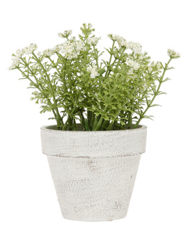 White Flowers In Pot 16.5cm by Heritage
