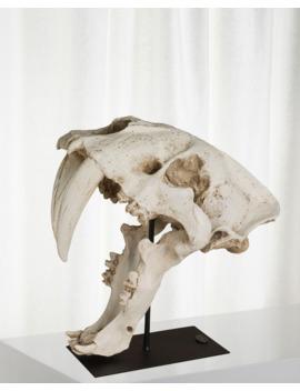 Sabertooth Skull by Authentic Models