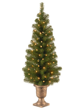 "Montclair Spruce Entrance Tree 10"" Black/Gold Plastic Pot With 50 Light, 4' by National Tree Company"
