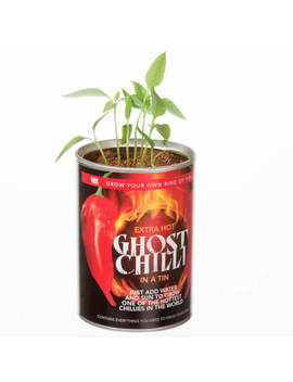 Grow Your Own Ghost Chilli by Iwoot
