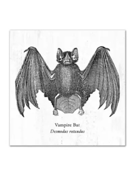 """Vampire Bat Desmodus Rotundus\"" 12 Inch X 12 Inch Canvas Wall Art by Bed Bath And Beyond"