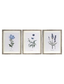 "(Set Of 3) 16""X20"" Framed Vintage Botanicals Decorative Wall Art   Threshold™ by Shop Collections"