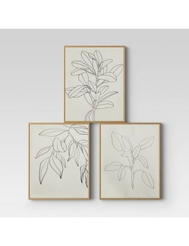 "Set Of 3 16"" X 20"" Leaf Illustrations Framed Wall Canvas   Opalhouse™ by Opalhouse"