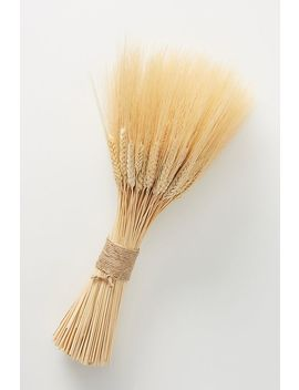 Dried Wheat Bundle by Anthropologie