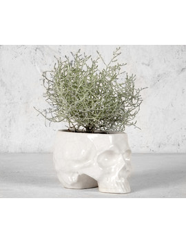 Skull Planter   Cracked White by Disturbia
