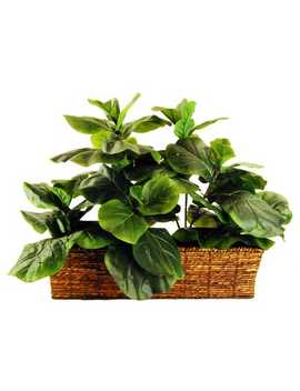 Fiddle Leaf Fig Ledge Basket Silk Plant by Pier1 Imports
