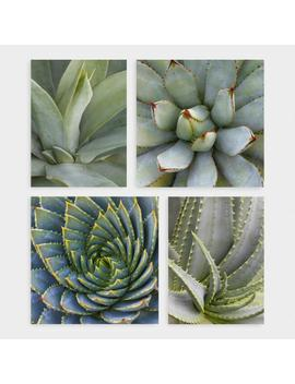 Succulents By Robin Hanson Canvas Print Wall Art Set Of 4 by World Market