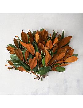 Fresh Magnolia Bunch by Terrain