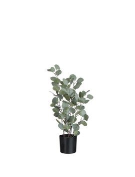 Eucalyptus Tree In Pot by The Seasonal Aisle