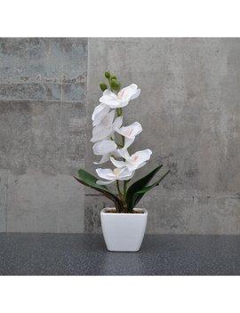 Desktop Orchid In Pot by 17 Stories