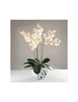Phalaenopsis Orchid In Vase by The Seasonal Aisle