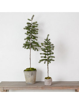 Faux Potted Pine Tree by Terrain