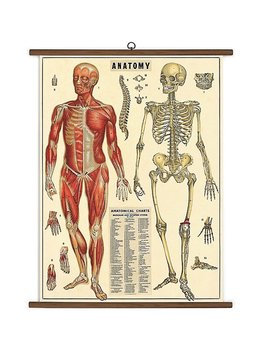 Anatomy Vintage School Chart by Paper Source