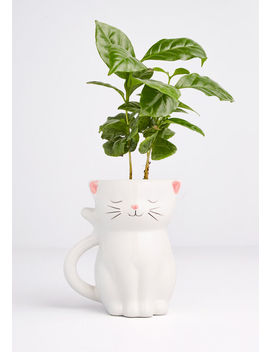 Paws Itively Growing Cat Planter by Modcloth