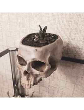 Skull Planter, Skull Decor, Human Skull Succulent Planter, Gothic Home Decor, Dia De Los Muertos, Gothic Decor, Halloween Skull Gift For Him by Etsy
