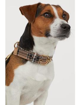 Dog Leash And Scarf by H&M
