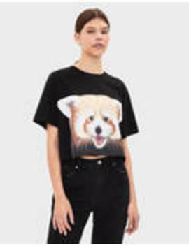 National Geographic Panda T Shirt by Bershka