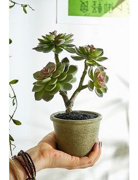 Faux Echeveria Potted Plant by Urban Outfitters