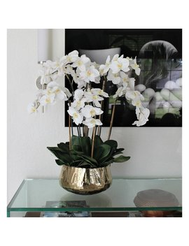 "22"" H X 18\"" W X 18\"" D Phalaenopsis Orchids Floral Arrangement And Centerpiece In Planter by Everly Quinn"