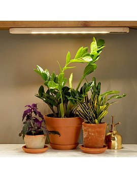 Hang Anywhere Grow Light by Sarah Burrows And Nick Behr