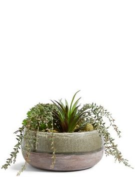 Mixed Succulents In Crackle Ceramic by Marks & Spencer