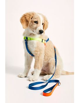 Neon Colorblock Leash by Ware Of The Dog