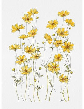 Yellow Cosmos Flowers Poster by J Rose Design