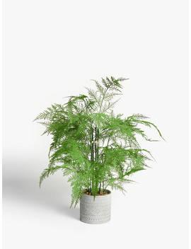 John Lewis & Partners Artificial Asparagus Fern by John Lewis & Partners