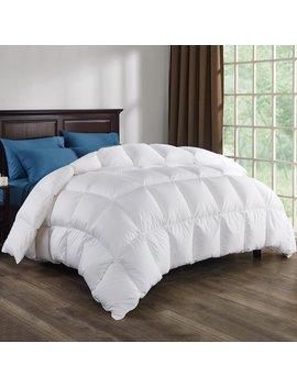 800 Fill Power Winter Down Comforter by Alwyn Home