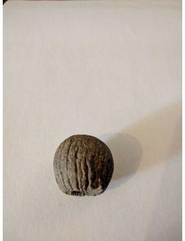 Meteorite by Ebay Seller