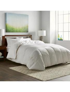 Nikki Chu White Goose Down Comforter by Nikki Chu