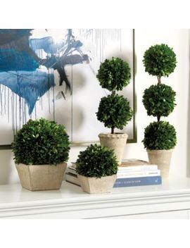 Preserved Boxwood Topiary by Ballard Designs