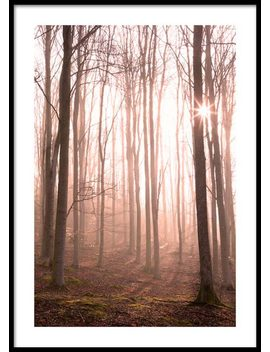 Forest In Fog Poster by Desenio