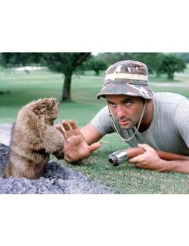 Caddyshack by All Posters
