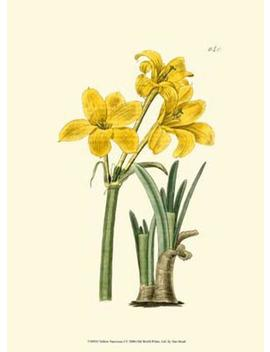 yellow-narcissus-i by allposters