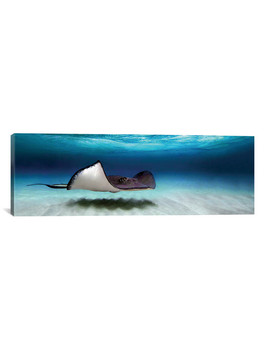 Southern Stingray, North Sound, Grand Cayman, Cayman Islands // Panoramic Images by Touch Of Modern