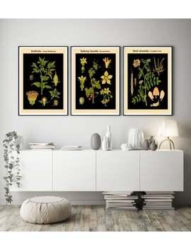 vintage-botanical-prints-set-of-3-german-botanical-art-prints by etsy