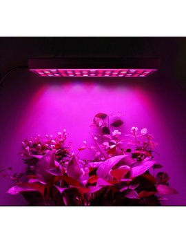clearence!-plant-grow-light by voomwa