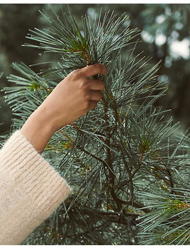 plant-a-tree-with-the-national-forest-foundation by madewell