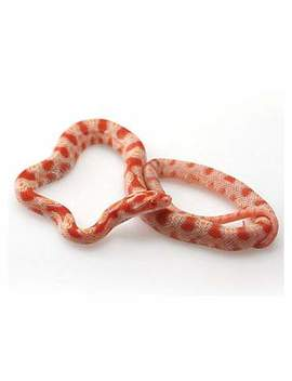 albino-cornsnake-(elaphe-guttata)albino-cornsnake-(elaphe-guttata) by petco