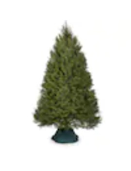 7 8 Ft Douglas Fir Real Christmas Tree by Lowe's