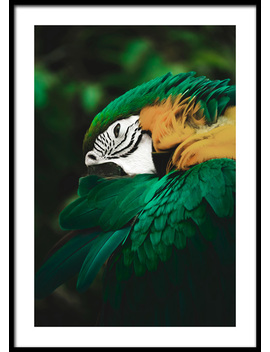 Jungle Parrot Poster by Desenio