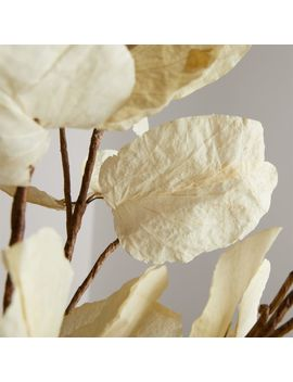 Mussaenda Leaf Stem by Crate&Barrel