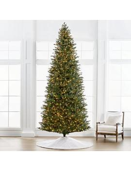 Fraser 12' Slim Profile Tree by Frontgate