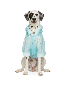 Blue Poldo Dog Couture Edition Waterproof Coat by Moncler Genius