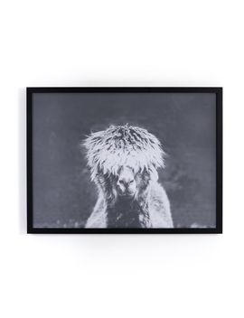 Framed Print   Llama Bad Hair Day by West Elm