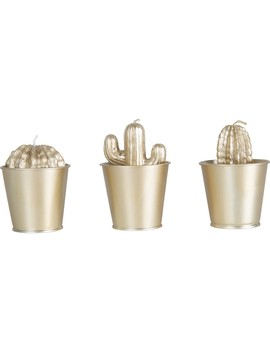 Kodu Gold Mini Potted Cacti Candles by Kodu